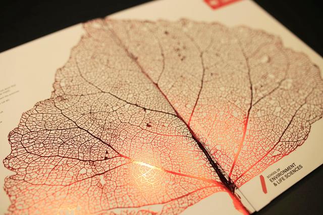 Salford Uni Prospectus Red Foil Leaf