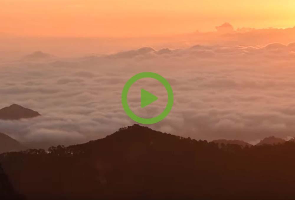 Video - Carbon Balanced Landing Page-1